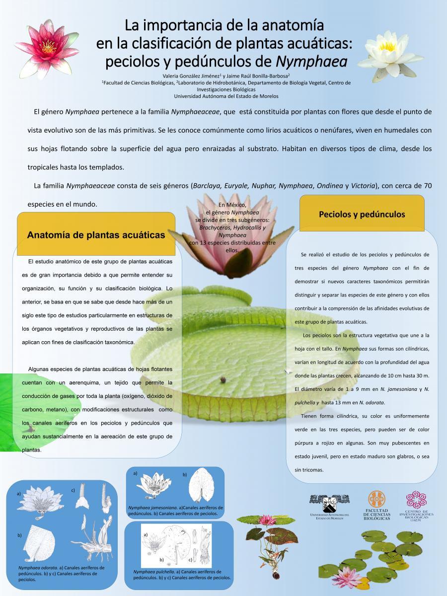La importancia de la anatomía en la clasificación de plantas ...